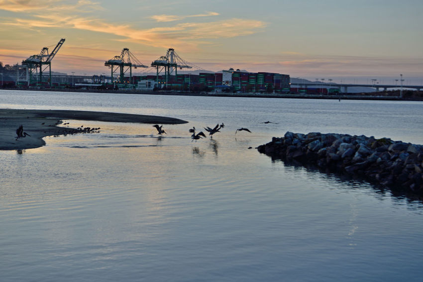 Sunset At Middle Harbor 11 Port Of Oakland, Ca Middle Harbor Gantry Cranes Maritime Port Containers Shipping Industry Waterfront♥ Pelicans Taking Off Sunset Sundown Sunset Silhouettes Sunset_collection Estuary Jetty Mudflats Low Tide San Francisco Bay Landscape_Collection Landscape_photography Nature Beauty In Nature Nature_collection Birdwatching Business Finance And Industry Crane - Construction Machinery Freight Transportation Harbor