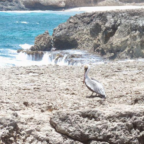 Betosalvestrini Beach Naturalbridge Pelican Birds Blue Kiomi Collection Blue Wave