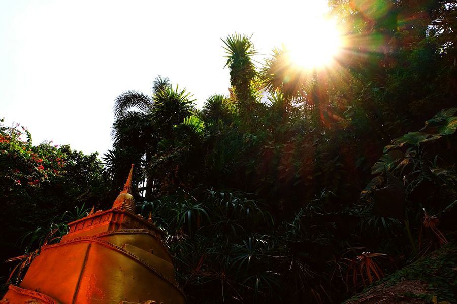 Tree Lens Flare Low Angle View Outdoors Nature Sky Bangkok Thailand. Travel Outdoor Photography Buddha Temple, Thailand Buddha Temple Travel Destinations Gold Arts Culture And Entertainment Spirituality History Architecture Pagoda Ancient