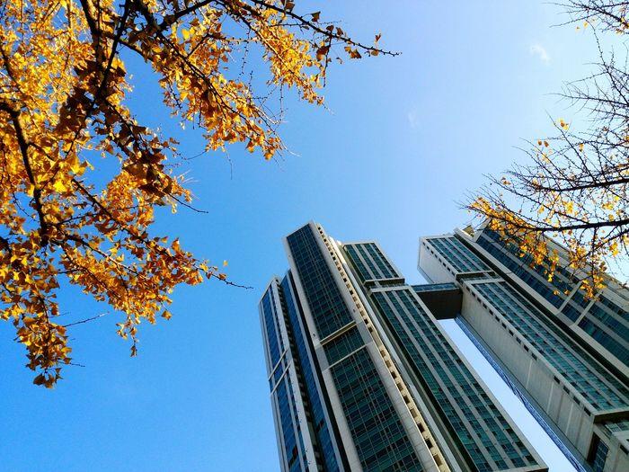 Autumn? Winter? Autumn Flavor Buildings Taking Photos Colors Showcase: December
