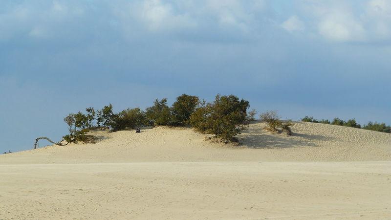Sand Dune Desert Water Beach Tree Sand Arid Climate Blue Backgrounds Sky