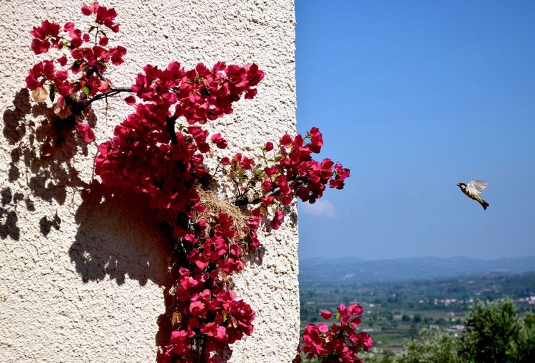 View of red flowering plant