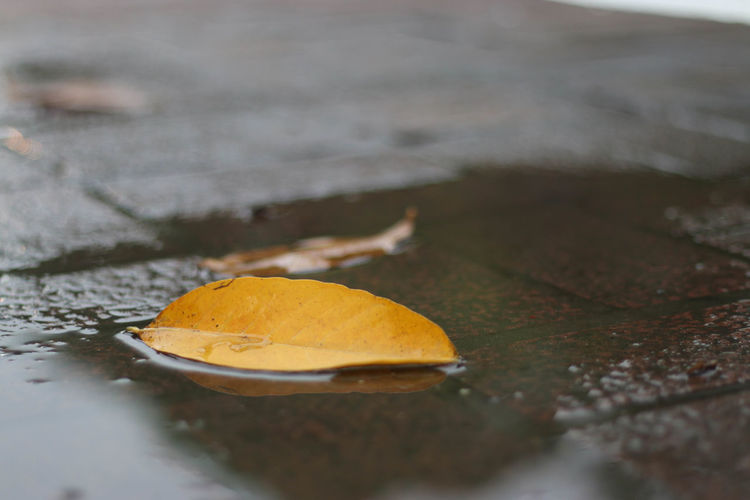 Close-up Day Fragility Freshness Horizontal Leaf Nature No People Outdoors Water Wet