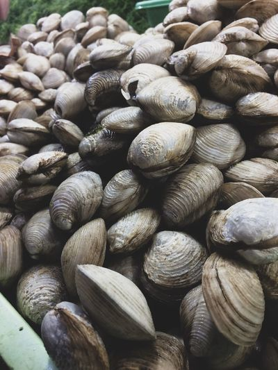 Close-up of mussels for sale
