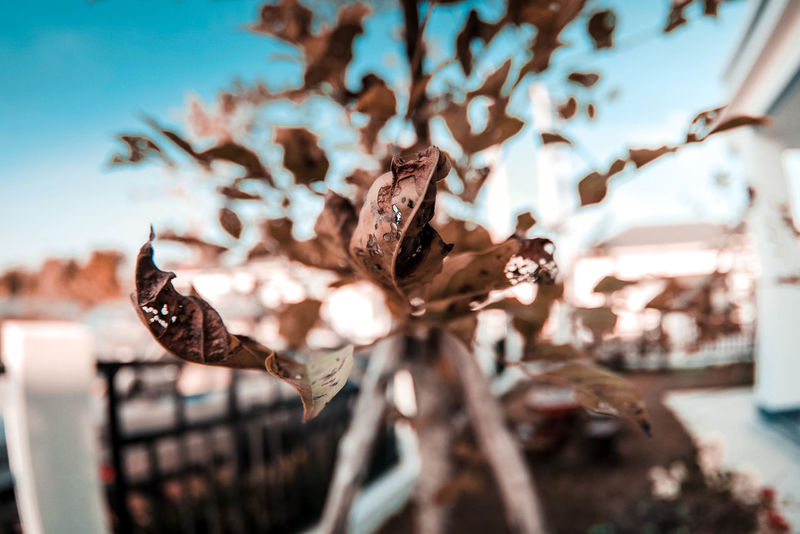 ดอกไม้สีน้ำตาล Animal Animal Themes Animal Wildlife Animals In The Wild Focus On Foreground Close-up Day Bird Vertebrate Dry Nature No People Group Of Animals Vulnerability  Plant Leaf Beauty In Nature Outdoors Fragility Selective Focus