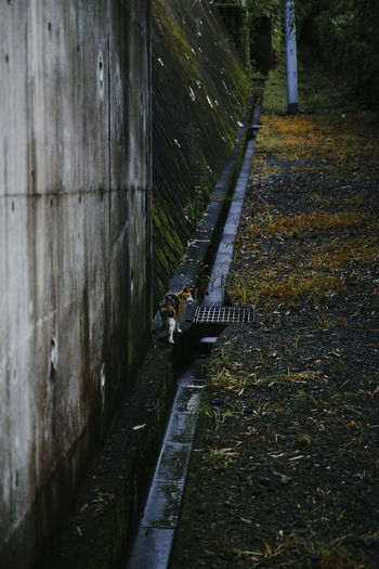Cat Cat Lovers Catoftheday Cats Of EyeEm Cat♡ Slop Sloping Road Turn Up