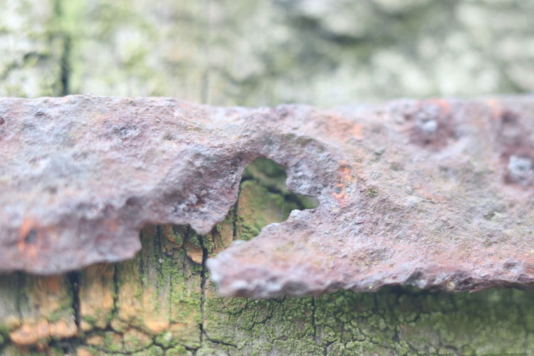 Metal&wood Eeyem Photography Beauty In Nature Best Shots EyeEm Eeyemgallery Eeyem Nature Lover Macro Photography Special View View Other Point Of View No People No Filter, No Edit, Just Photography Wood - Material Rusty Metal Fence Defocused Old Close-up Tree Stump