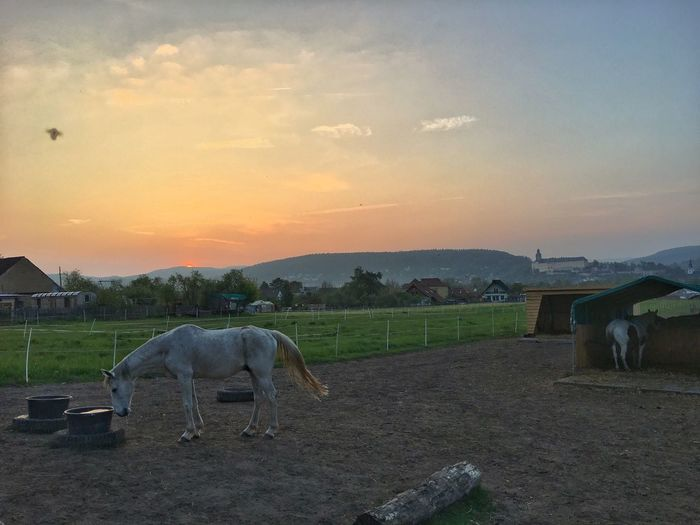 Horse farm at sunset Domestic Animals Animal Themes Mammal Livestock Horse Sunset Two Animals Herbivorous Grazing Sky Ranch Field Cow No People Outdoors Nature Landscape Farm Animal Rural Scene Standing The Great Outdoors - 2017 EyeEm Awards Beauty In Nature