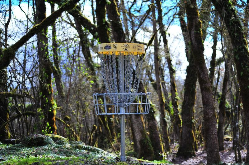 Beauty In Nature Birdhouse Day Disk Golf Hole Forest Nature No People Outdoors Tranquility Tree Tree Trunk