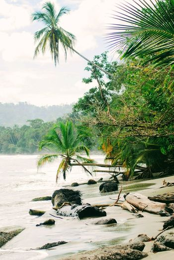 Costa Rica Tree Nature Water Palm Tree Beauty In Nature Reflection Landscape Outdoors Day Sky Scenics Forest Palm Trees Windy Sea No People Lake Been There.