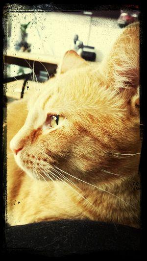 Vincent Cats My Cats
