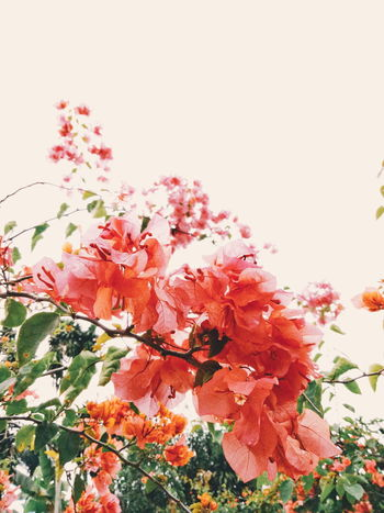 Flower Powe 🌸 🌸 🌸 Growth Low Angle View Leaf Beauty In Nature Flower Nature Fragility Change Botany Red Day In Bloom Springtime Plant Freshness Pink Color Sky Vibrant Color High Section Blossom Mobile Photography Taking Photos Photos Photographer Theme