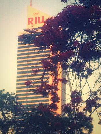 Public Places Gdl Riu