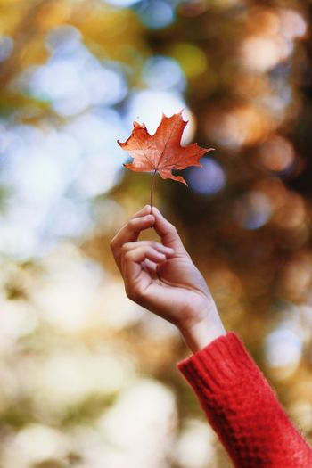 ~bokeh Maple Leaf Canon Canada 85mm 1.8 Bokeh Leaf Red Colours Autumn Human Hand Holding Close-up