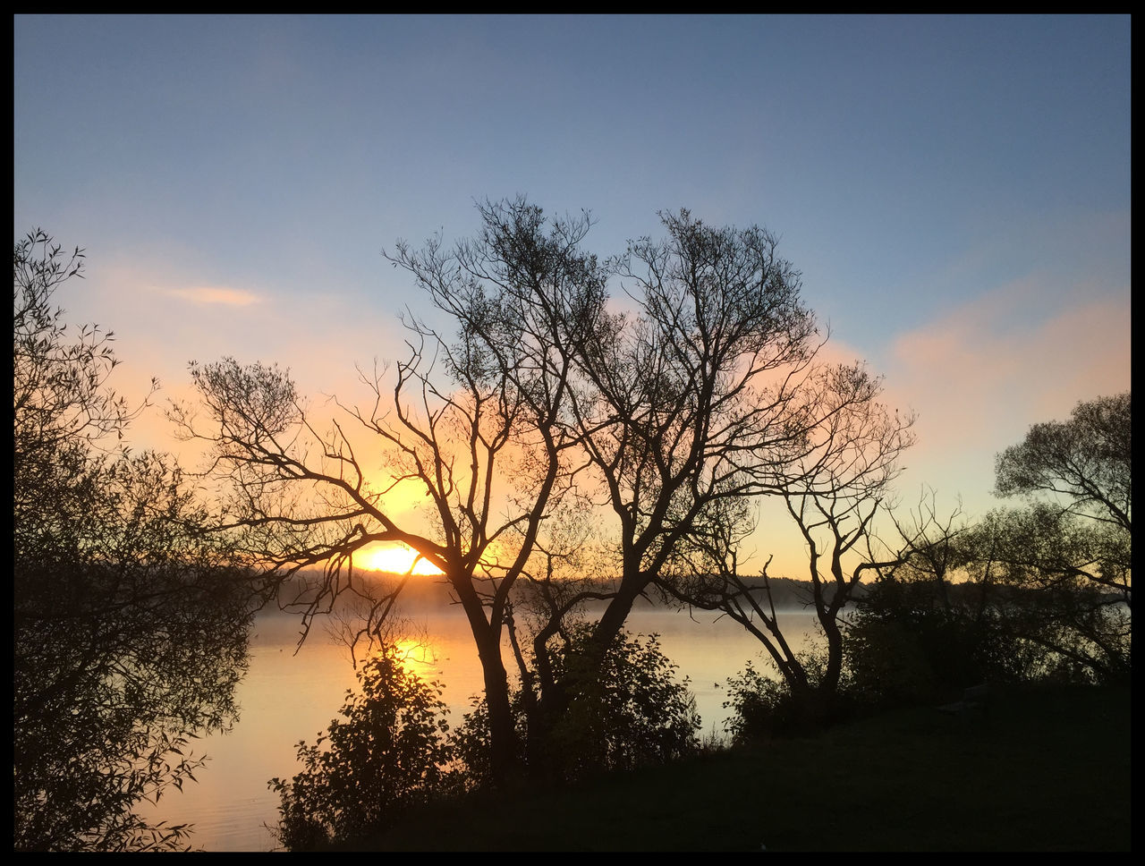 tree, sunset, tranquility, tranquil scene, beauty in nature, silhouette, scenics, nature, orange color, sky, water, lake, majestic, outdoors, idyllic, reflection, no people, bare tree, branch, day