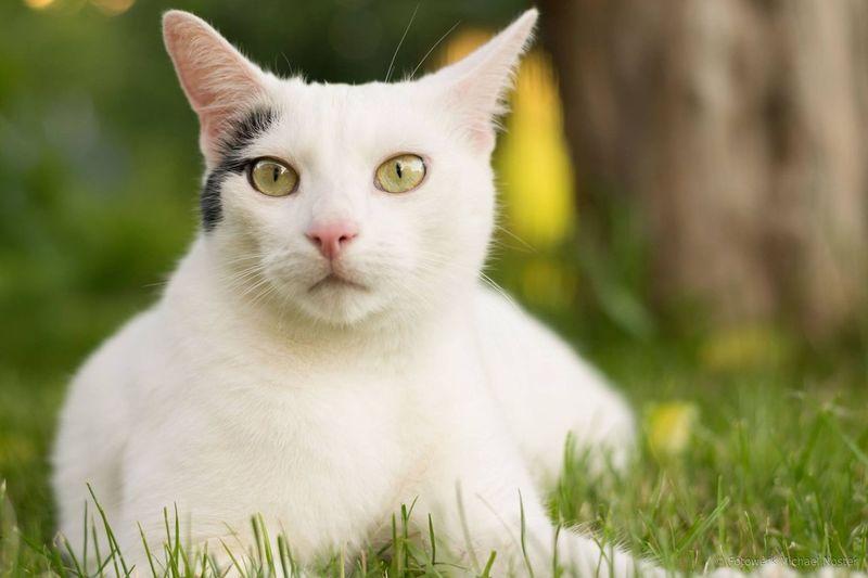 Domestic Cat Pets Feline Domestic Animals Grass Portrait One Animal Animal Animal Themes Cat Summer