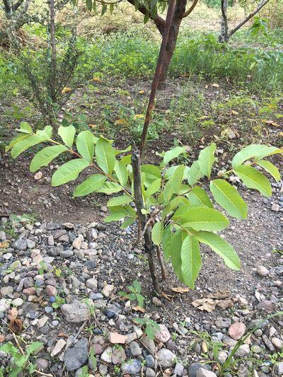 Ağaç Umut Gelecek Bakın Büyüyün Sevin