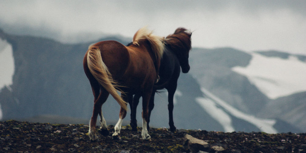 Horses standing on land
