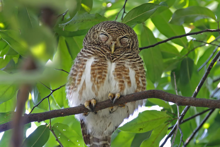 Animal Wildlife Animal Themes Animals In The Wild Animal One Animal Vertebrate Tree Plant Branch Leaf Plant Part Bird Low Angle View Perching No People Nature Bird Of Prey Day Owl Green Color