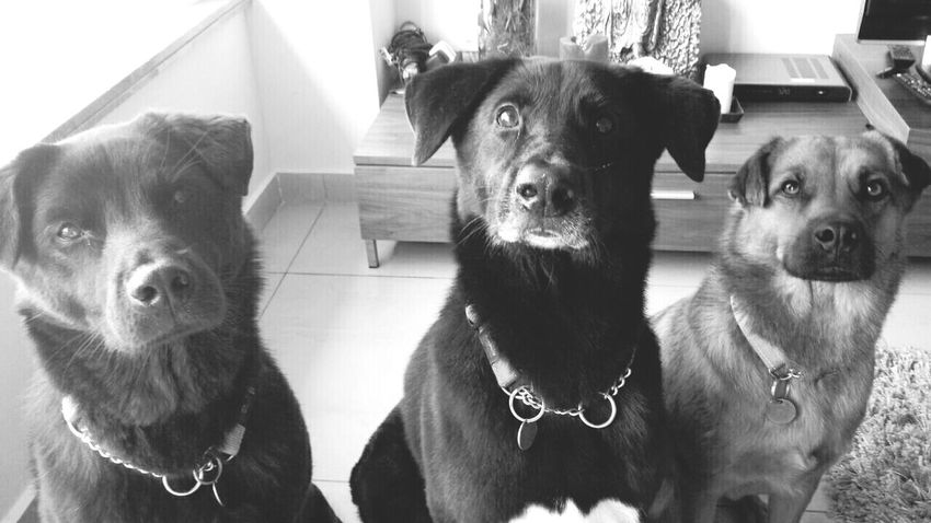Boys and girl. Black And White Dogs