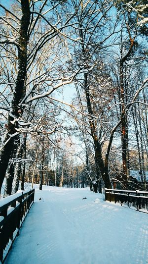 Lithuanian winter // Winter Snow Tree Cold Temperature Nature Beauty In Nature Outdoors Day Sky Tranquility Winterwonderland Lithuania Lithuania Travel Lithuania Nature <3