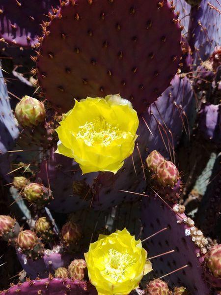 Nofilter Desert Beauty sometimes the desert is beautiful