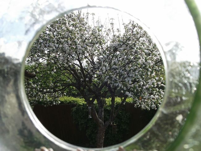 Pivotal Ideas Portal To Beauty Taking Photos Artistic Expression Another Dimension Hazy Tunnel Beauty Of Nature Tree_collection