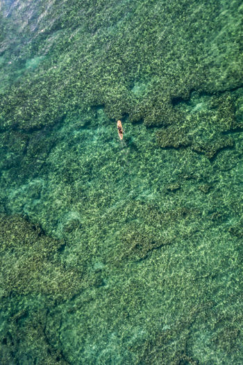 Aerial view of a Stand up Paddle Board Surfer Green Color Hawaii Oahu Surf Adventure Aerial View Beauty In Nature Clear Water Day Full Length High Angle View Leisure Activity Lifestyles Nature Ocean One Person Outdoors Paddleboarding Real People Reef Sea Stand Up Sup Vacations Water