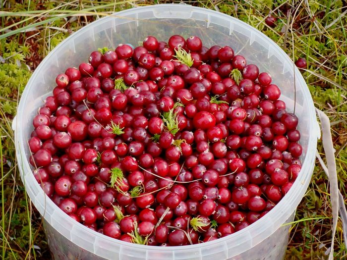 High angle view of cranberries in container