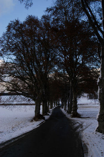 Tree avenue in winter evening Allee Avenue EyeEmNewHere Bare Tree Beauty In Nature Car Carlights Cold Temperature Day Nature No People Outdoors Road Scenics Sky Snow The Way Forward Tranquility Tree Winter