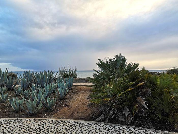Tree Water Palm