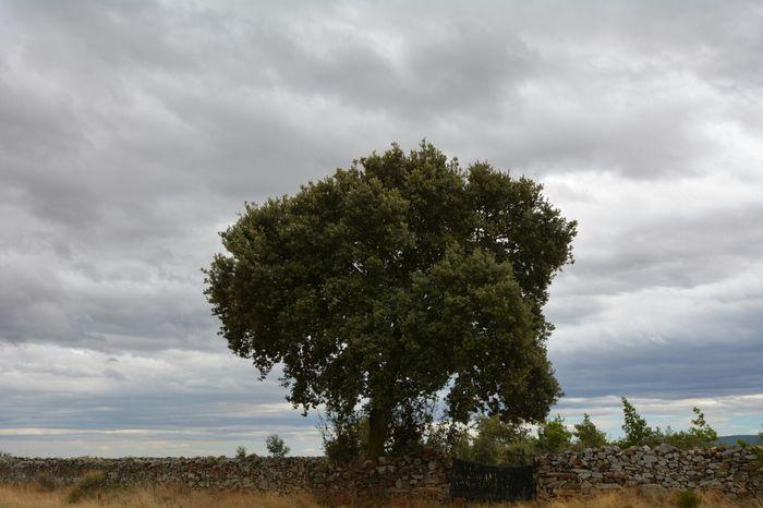 En el tramo del Camino de Santiago que va de Astorga a Foncebadón. Sin edición. Green El Camino De Santiago No Edit/no Filter Landscapes With WhiteWall
