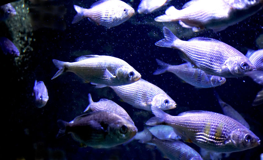 group of fishes Swimming Animal Underwater Water Group Of Animals Sea Animal Themes Fish Animals In The Wild Animal Wildlife Vertebrate Marine Sea Life Large Group Of Animals No People Nature Transparent UnderSea School Of Fish