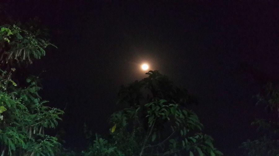 ดาวจันทร์ Night Moon Full Moon Nature Beauty In Nature Tree Moonlight Sky Astronomy Space And Astronomy Tranquility Scenics Tranquil Scene No People Landscape Outdoors Star - Space