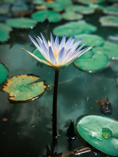 Flower Head Flower Water Close-up Plant Water Plant Water Lily Pollen Pond Plant Life Blooming Floating