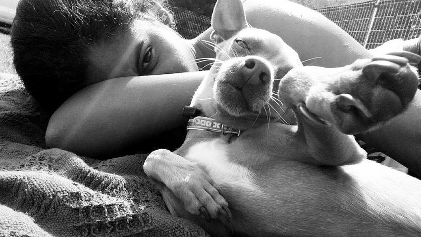 Pets Corner Mydog♡ Holiday Relaxing Summer2015 Summertime