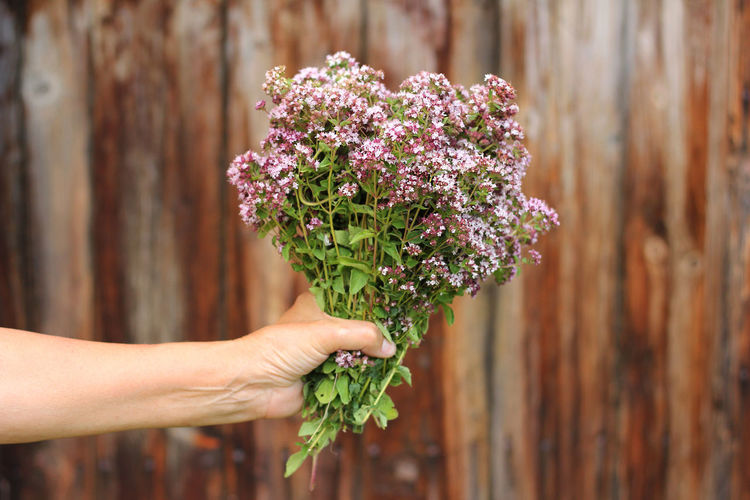 Cropped hands holding purple bouquet