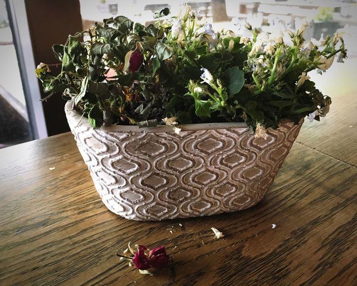 Tot Wood Tabletop Dead Flowers Flower Death Plant Summer Exploratorium