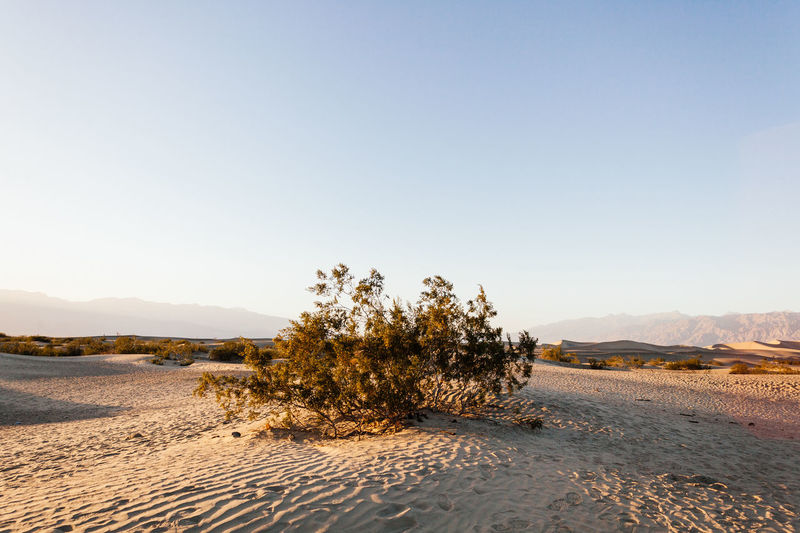 Bush In Mojave Desert Against Sky