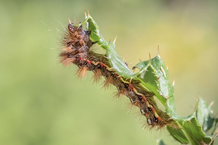 caterpillar Caterpillar Insect Close-up Animal Wildlife Nature Animal Themes Beauty In Nature Outdoors
