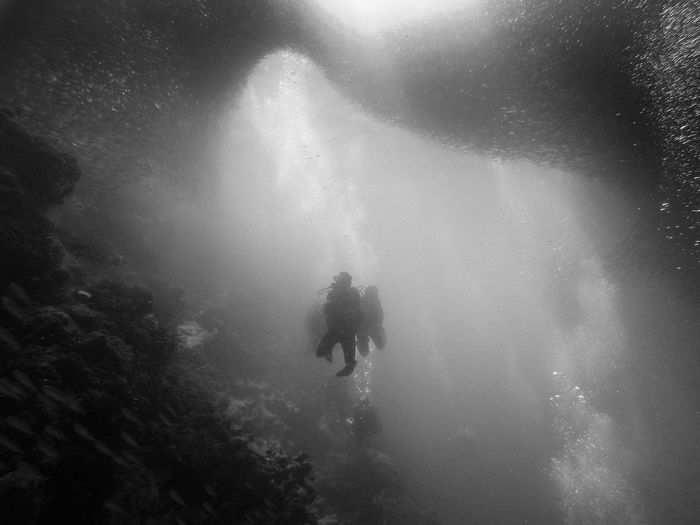 Group of divers under a giant school of sardines, Moalboal, Cebu (the Philippines) Adventure Animal Themes Animals In The Wild ASIA Black & White Cebu Exploring Extreme Sports Leisure Activity Lifestyles Nature Outdoors Philippines Real People Scuba Diver Scuba Diving Sea Life Sport Swimming Travel Travel Destinations Underwater Unrecognizable Person Vacations Miles Away