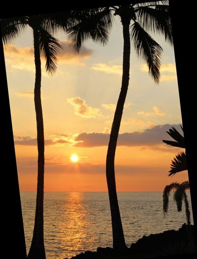 It is a sunset at Hawaiian beaches with coconut trees. Beautiful view in Nature. Sunset