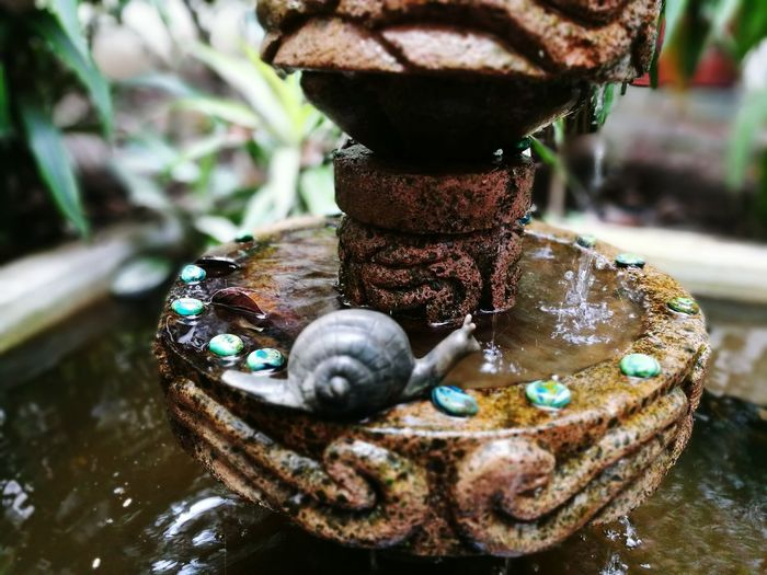 Fountain Snail Day Outdoors
