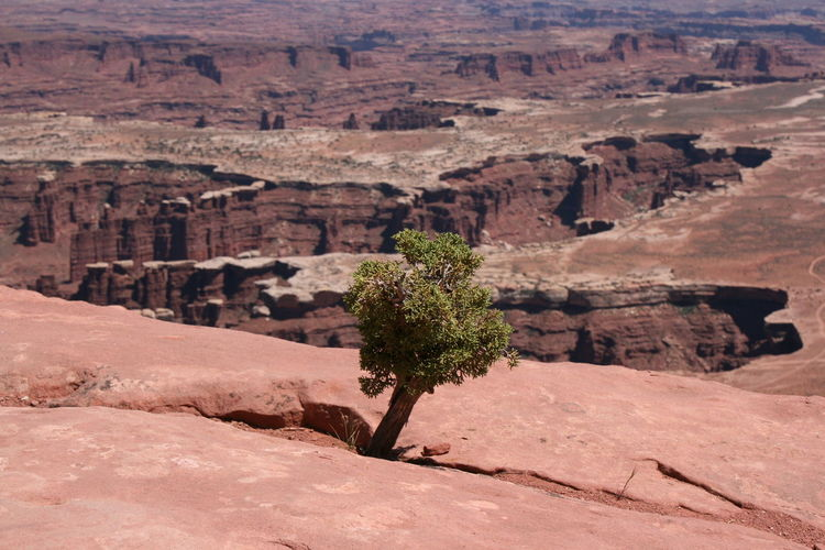 High angle view of plant on rock formations at arches national park