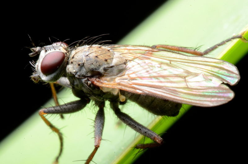 Animal Themes Beauty In Nature Close-up Focus On Foreground Insect Outdoors Wildlife