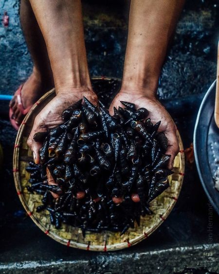 Travel Photography Philippines The Week On EyeEm Photography The Hands That Feeds Seafood Shell Fish