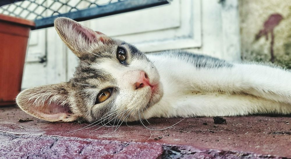 Sleepy Kitty Sleeping Cat Cat Mascota Street Photography Gato Cat Eyes Animal Photography Feline Feline Eyes Horizontal Domestic Animals Domestic Cat Domestic Animal Domesticanimal Cat Lovers Cats Cat♡ Cats Of EyeEm Cats 🐱 Catsoneyeem Catsoftheworld Catslife Cats Lovers  Catslover