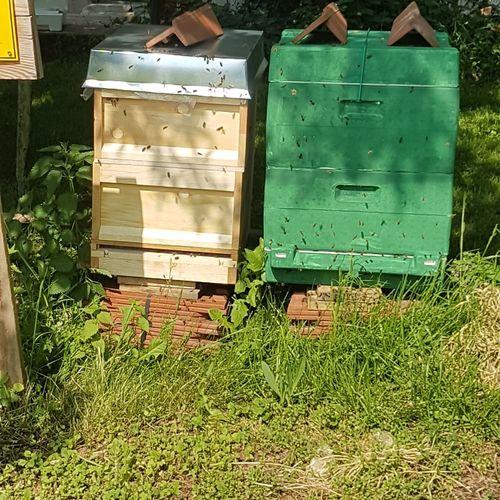 Bienenvölker APIculture Beehive Grass Green Color Honey Bee Bee