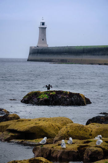 Birds Perching On Rocks By Sea Against Clear Sky