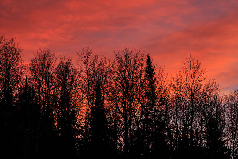 Sunset fire. Fiery Sunset... The Week On EyeEm Bare Tree Bare Trees Bare Trees In Winter Beauty In Nature Clouds Clouds And Sky Day Fiery Fiery Sky Forest Growth Landscape Nature No People Outdoors Scenery Scenics Silhouette Sky Sunset Tranquil Scene Tranquility Tree